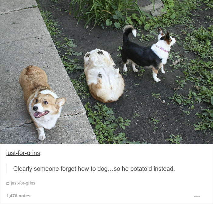 15 dog posts on tumblr that are impossible to get through without