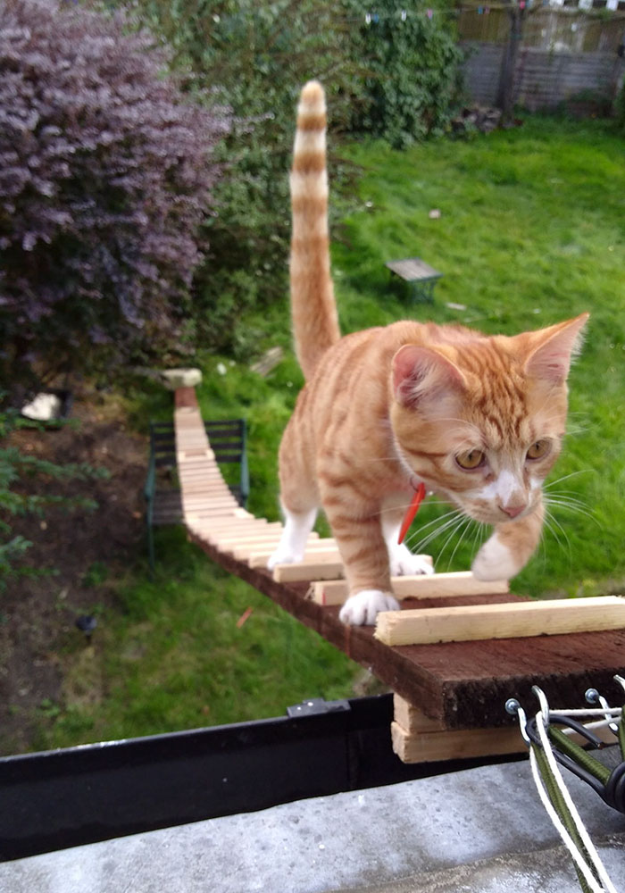 guy-builds-sneaky-cat-ladder-3