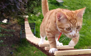 When The Landlord Banned Cat-Flaps, This Genius Guy Built A Ladder For His Cat To Sneak In