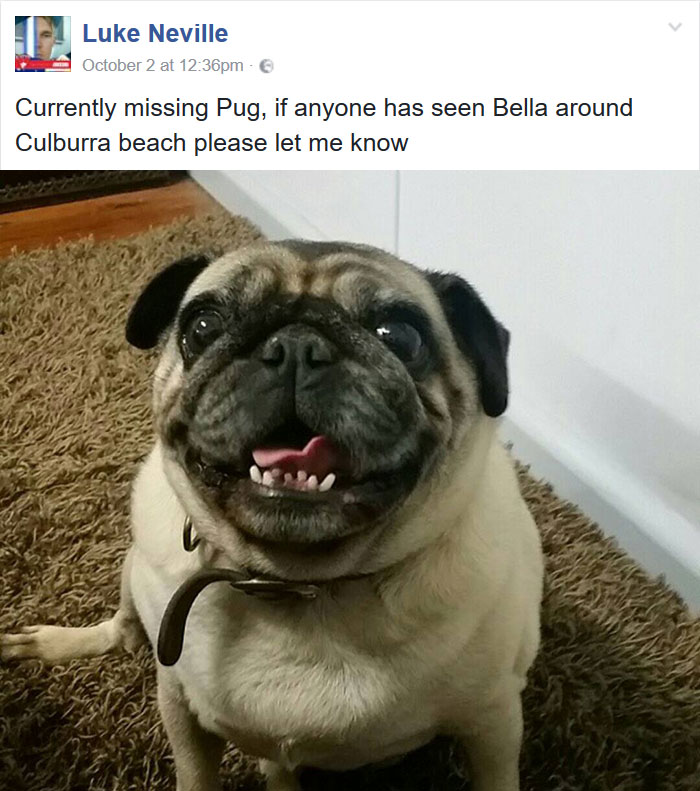 guy-lost-dog-got-wrong-pug-5