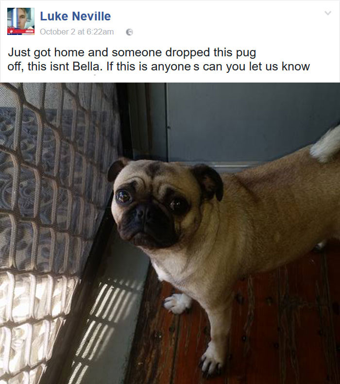guy-lost-dog-got-wrong-pug-7