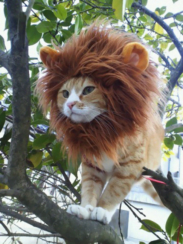 #5 Lion Cat & 10+ Terrifyingly Pawsome Halloween Cat Costumes | Bored Panda