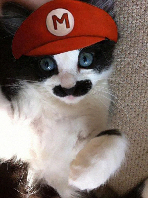 #3 Mario Cat & 10+ Terrifyingly Pawsome Halloween Cat Costumes | Bored Panda