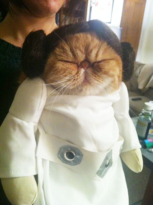 Princess Leia Kitty