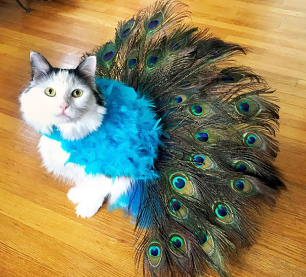 Pretty Peacock Cat Costume I Made For Sophie