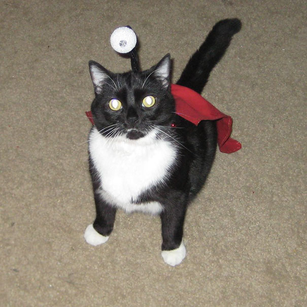 Let The Feast Of A Thousand Hams Begin! - My Cat Stewie Dressed Up As Nibbler From Last Halloween