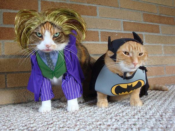 Jocat And Batcat