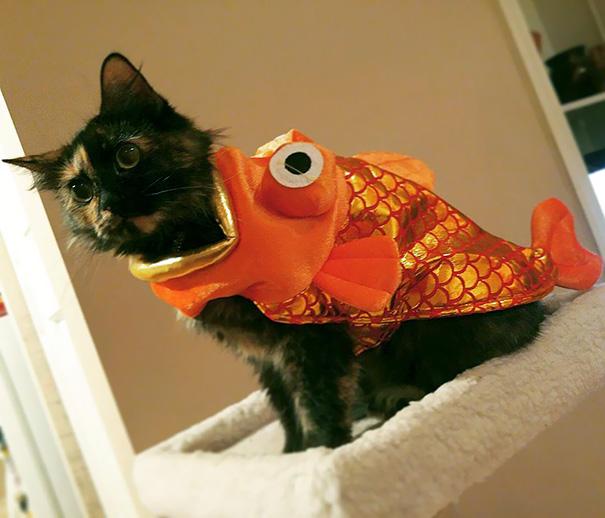 Marigold The Goldfish