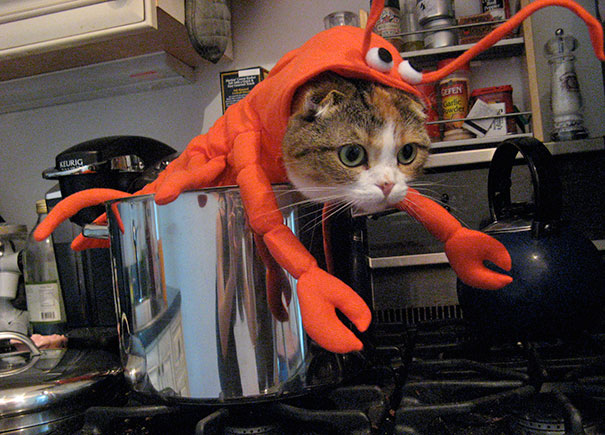 Katamari Dressed As A Lobster