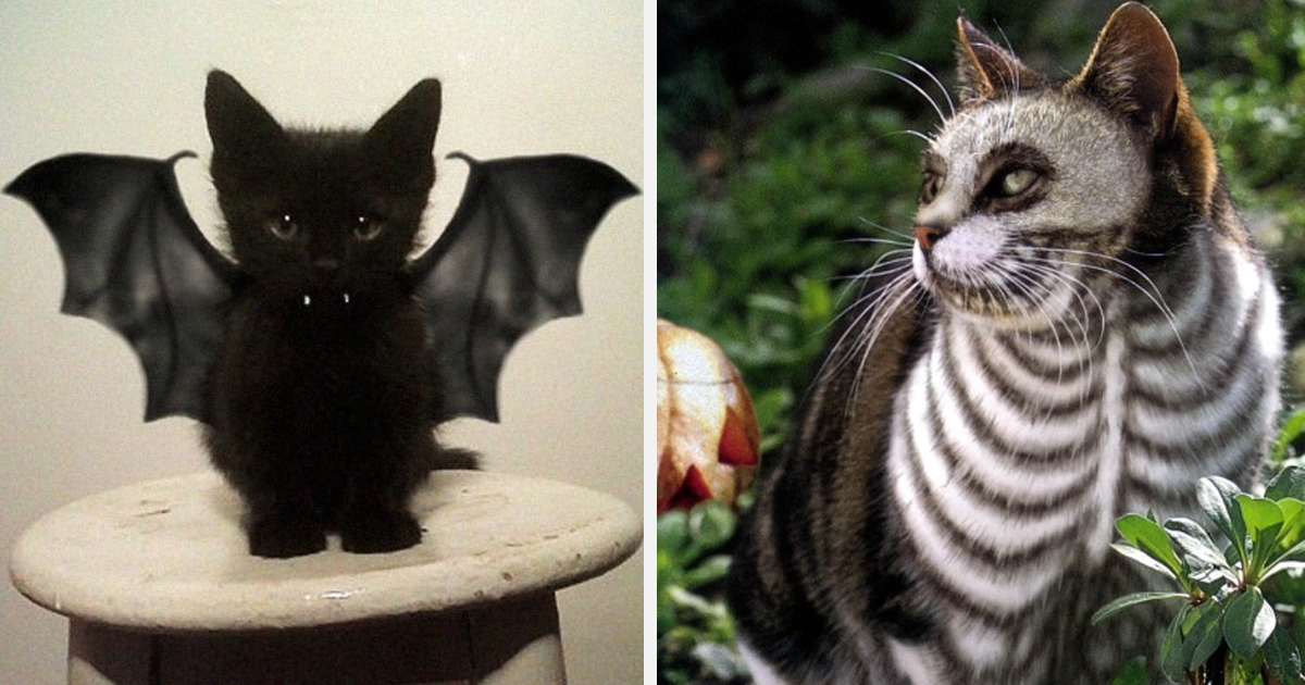10+ Terrifyingly Pawsome Halloween Cat Costumes | Bored Panda