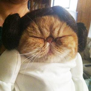 10+ Terrifyingly Pawsome Halloween Cat Costumes