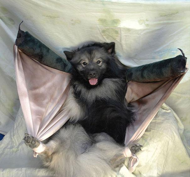 A Batdog