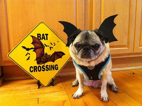 Pug-Bat