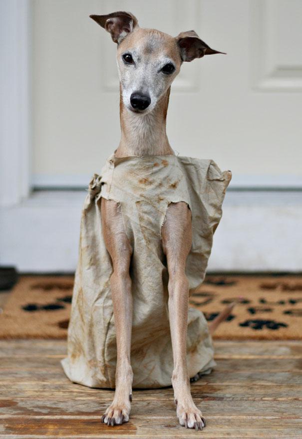 Dobby The House Dog