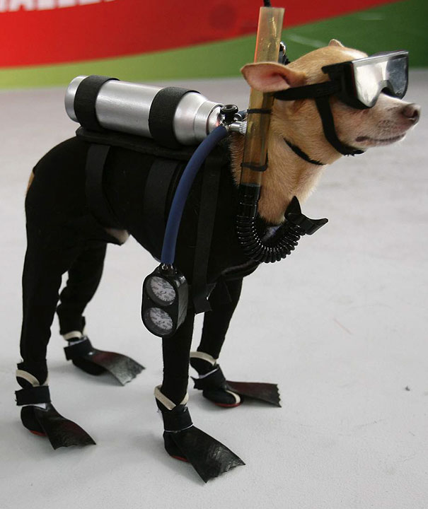Snorkeling Pup & 50+ Terrifyingly Pawsome Halloween Costumes For Dogs!