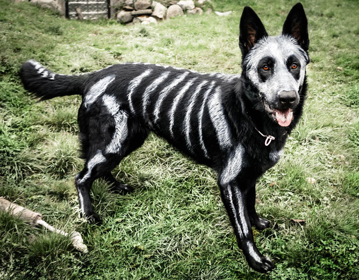 89 Terrifyingly Pawsome Halloween Costumes For Dogs