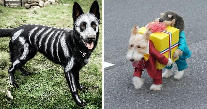 20 terrifyingly pawsome halloween costumes for dogs - Dogs With Halloween Costumes On