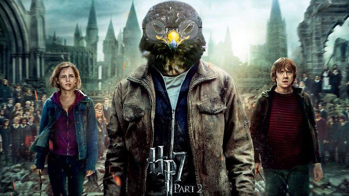 Hawk Potter
