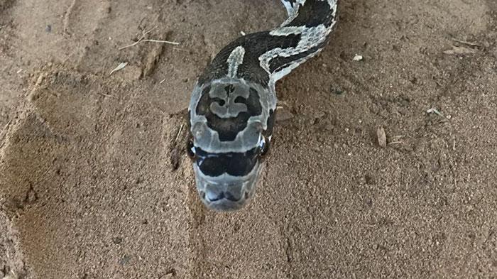 hipster-snake-sunglasses-karlie-gray-1a