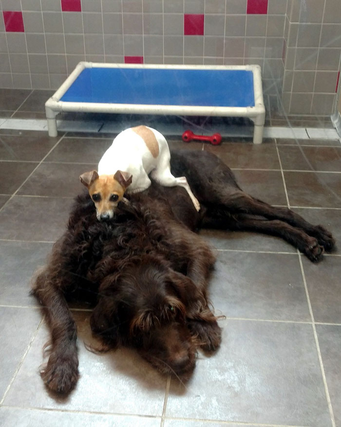 homeless-dogs-cuddling-1