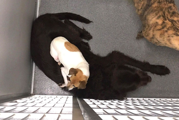 homeless-dogs-cuddling-3
