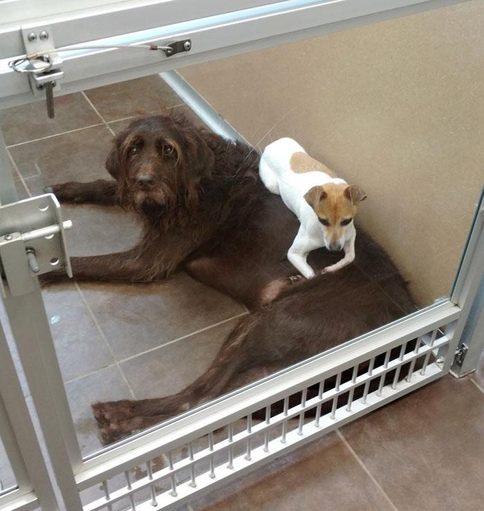 homeless-dogs-cuddling-4