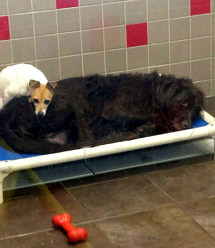 homeless-dogs-cuddling-5