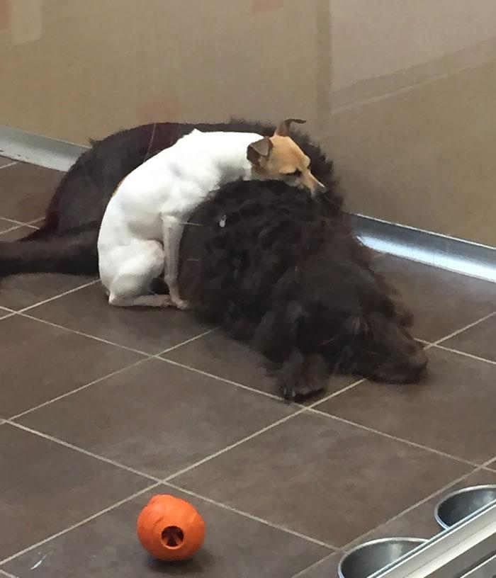 homeless-dogs-cuddling-8