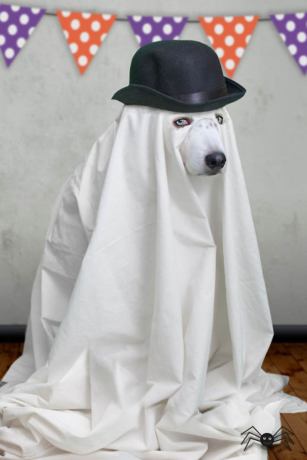 Classy Ghost