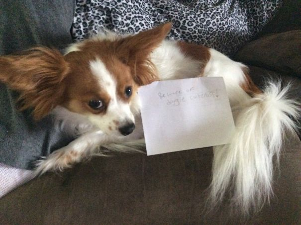 Beware Of Doggie Cuteness!