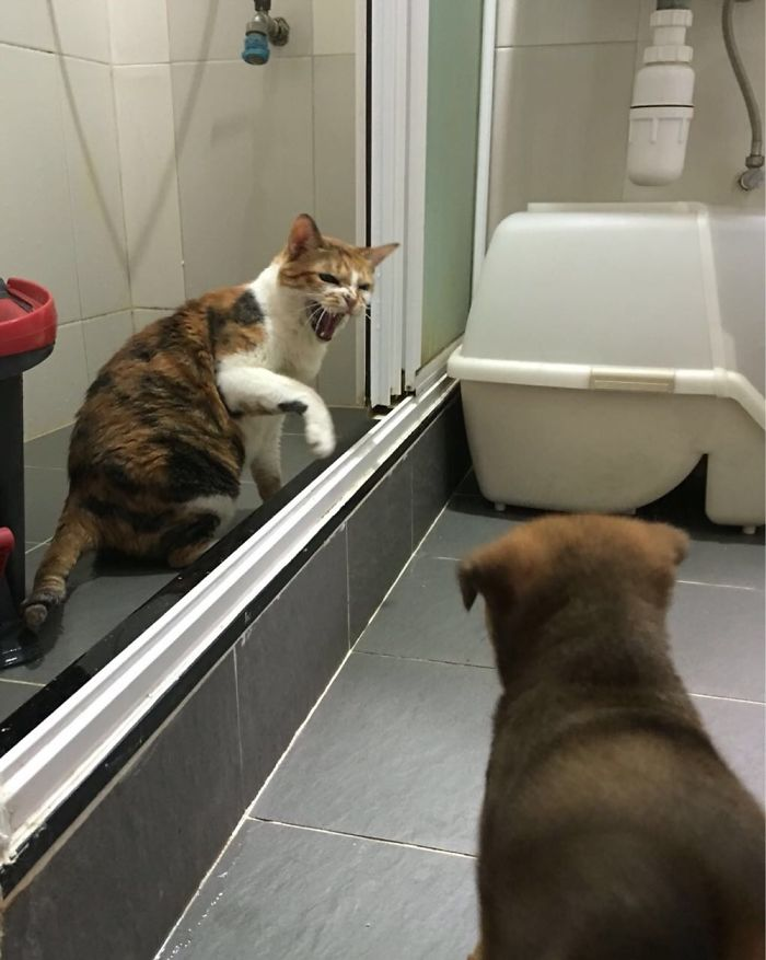 """""""get Out You Fluffy Bastard I'm Using The Toilet!!!"""""""
