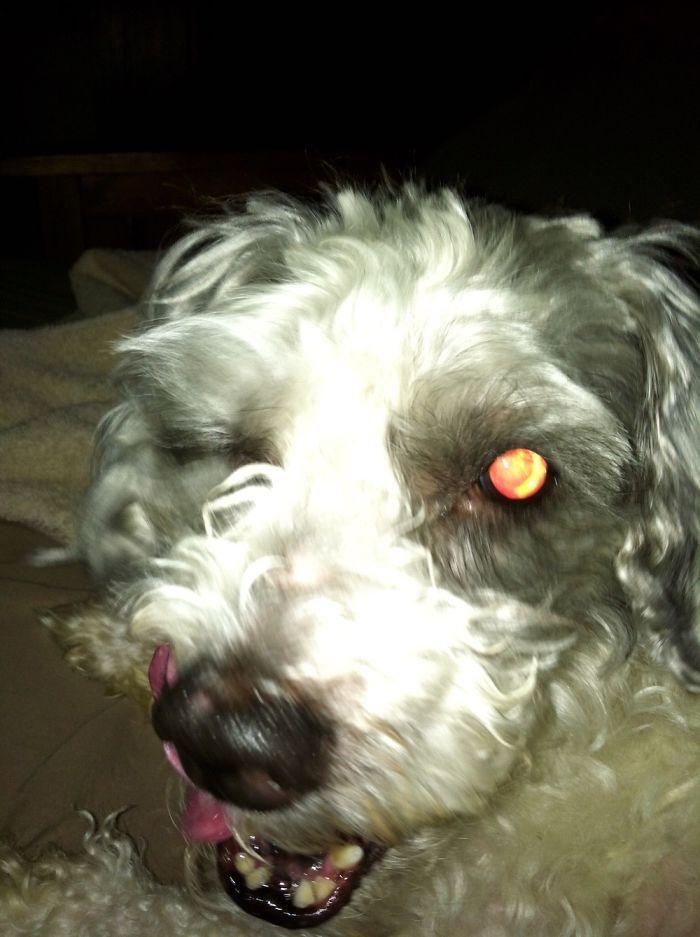 My Dog Is A Big Fan Of The Walking Dead……