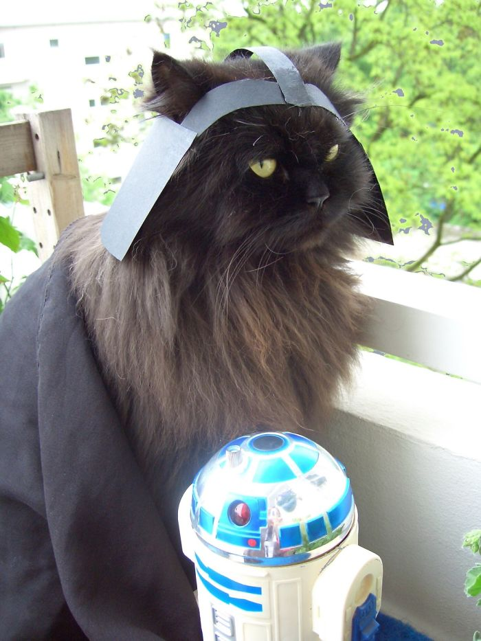 Our Justus Dressed As Darth Vader – May The Feline Be With You!