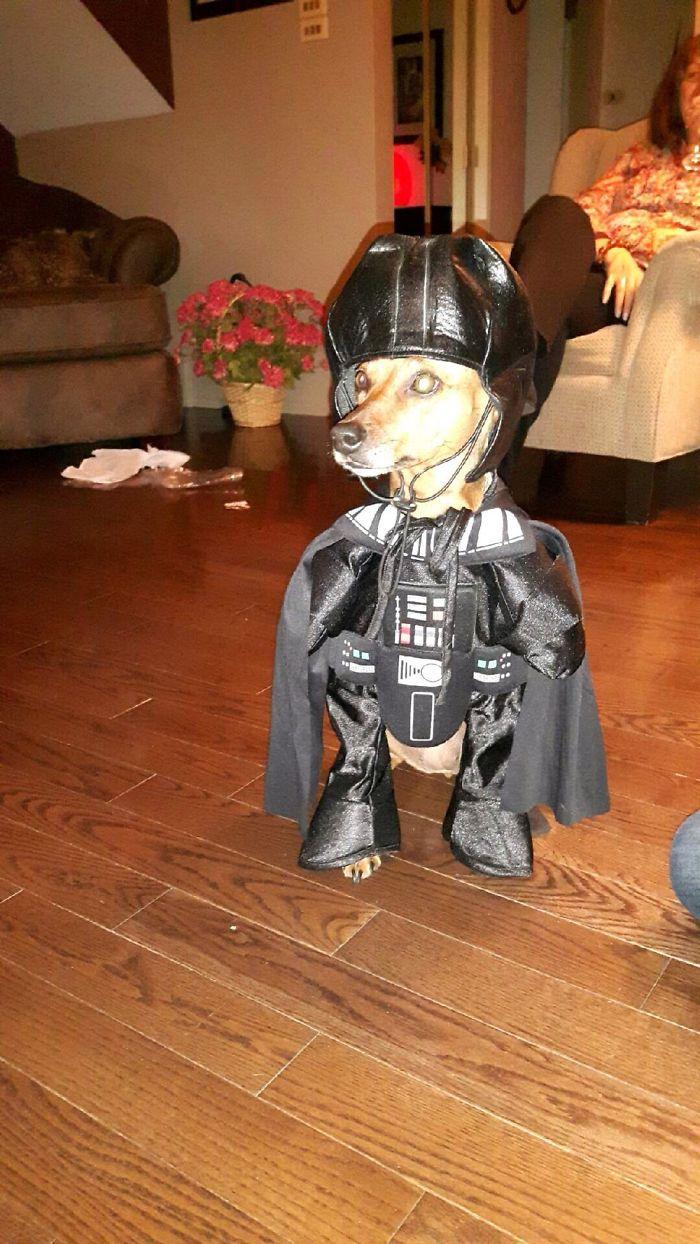 Darth Doggie