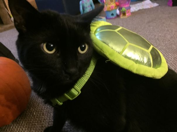 Lucky The Unimpressed Turtle