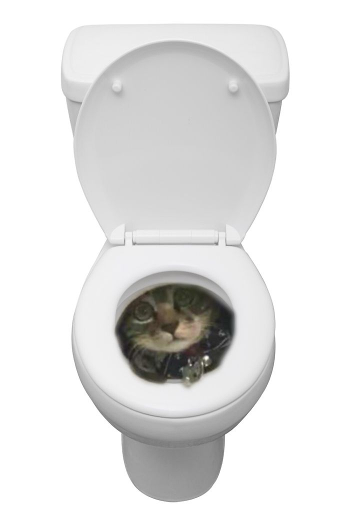 Toilet Humour Cat