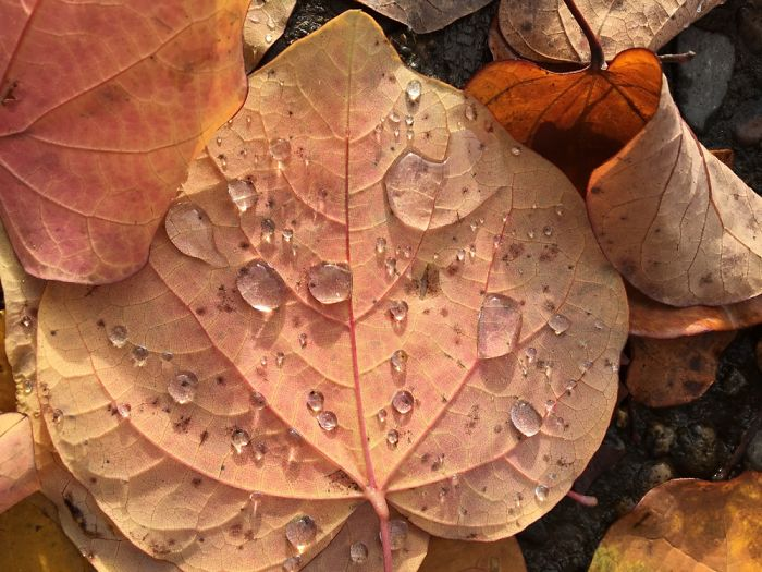 I Photograph Leafs With My Iphone 6 And The Results Are Amazing!