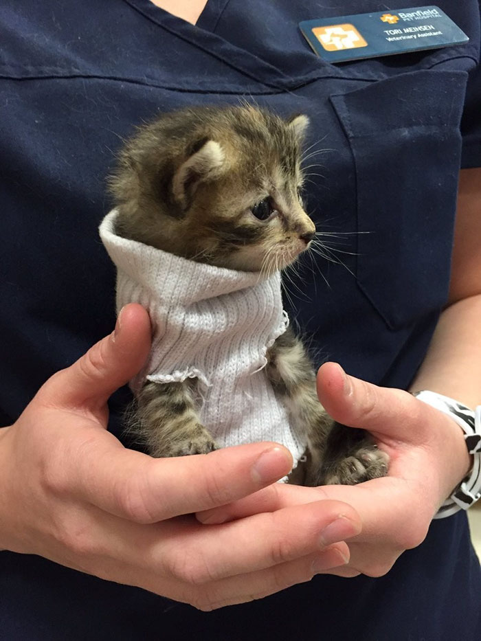 kitten-tube-sock-sweater-hurricane-matthew-1