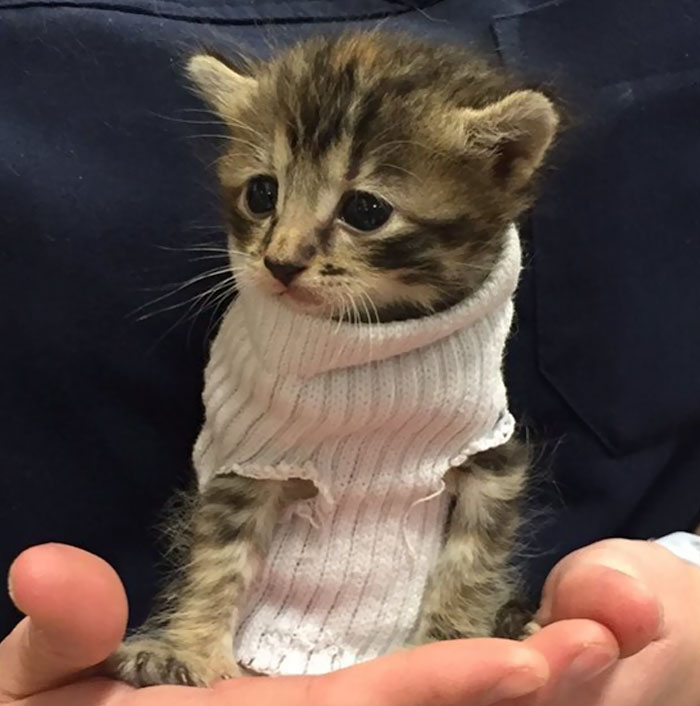 kitten-tube-sock-sweater-hurricane-matthew-4