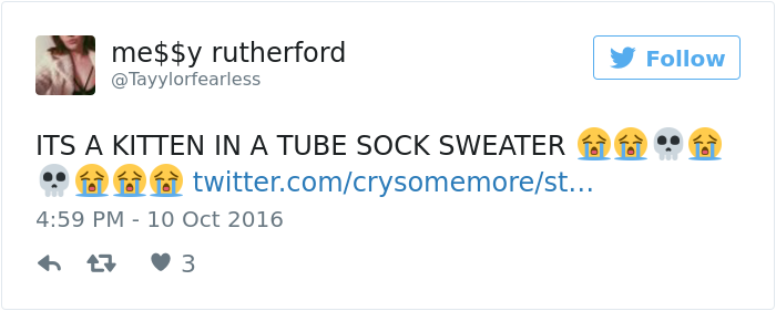 kitten-tube-sock-sweater-hurricane-matthew-5