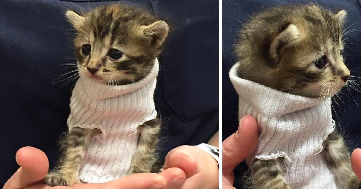 Kitten Rescued From Hurricane Matthew Gets Tiny Sock