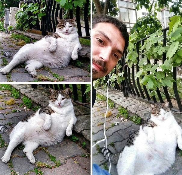 laid-back-cat-statue-tombili-istanbul-14