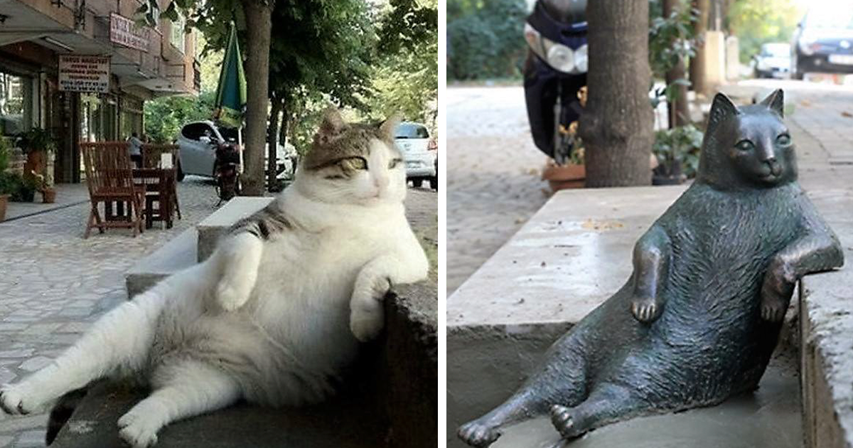 Istanbul's Most Famous Cat Honored With Its Own Statue At Its Favorite Spot
