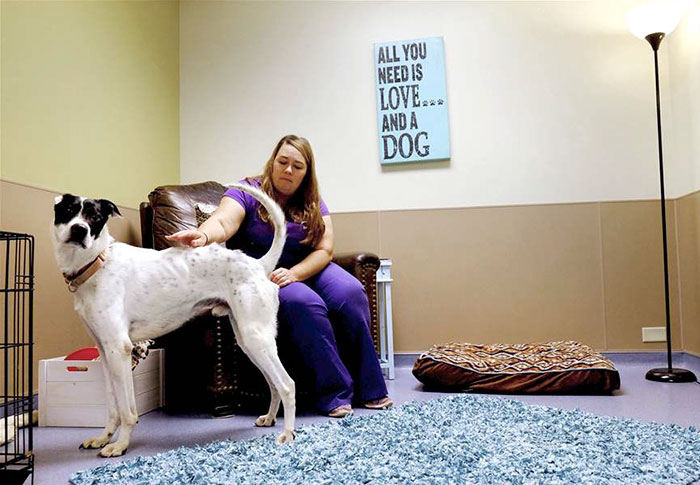 living-rooms-shelter-dogs-ohio-5