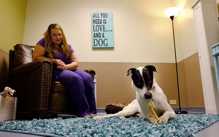 living-rooms-shelter-dogs-ohio-6