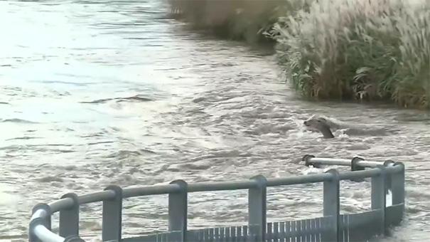 man-saves-deer-floodwaters-iowa-3