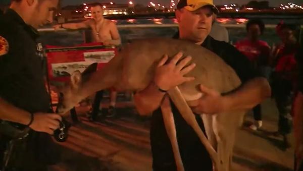 man-saves-deer-floodwaters-iowa-4