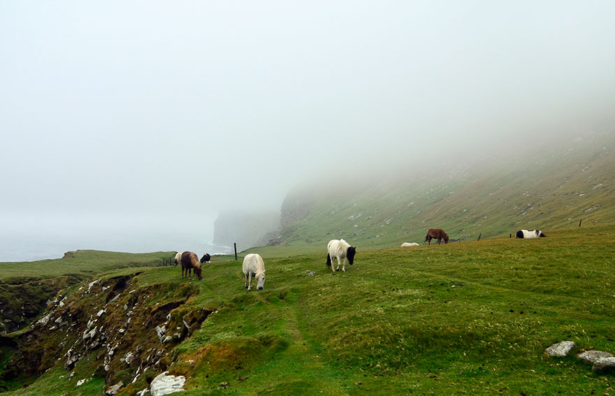 This Island Has More Miniature Ponies Than Humans Bored