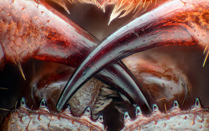 2016 Nikon Macro Photo Contest Winners Show The World Like You've Never Seen Before