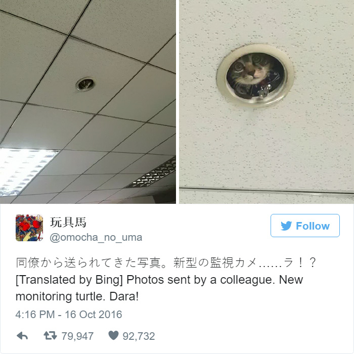 office-ceiling-cat-monitoring-omocha-no-uma-6